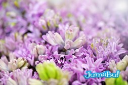 Ethereal background of lilac-coloured flowers