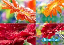 imagenes-flores-colores-rosas