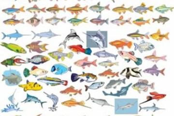 peces en vectores - Peces Coloridos Vectorizados