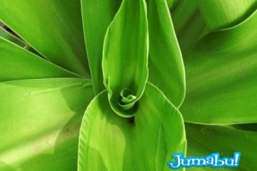 textura hojas planta arbol 500x3752 - Texturas de Hojas Verdes