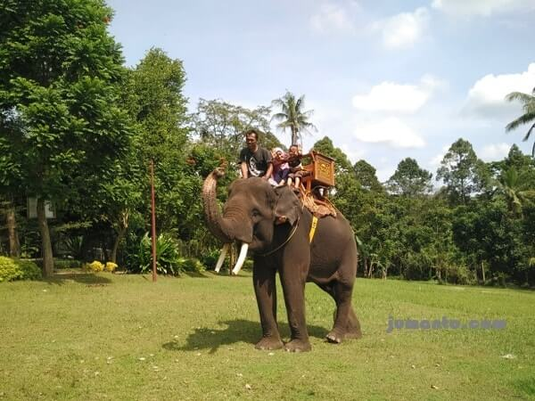 foto naik gajah di taman satwa lembah hijau