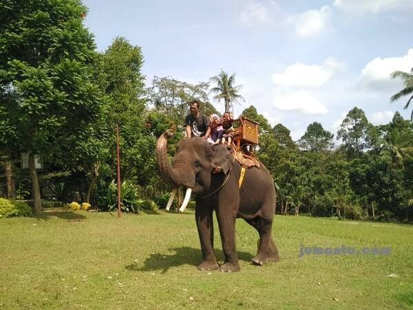 naik gajah lembah hijau