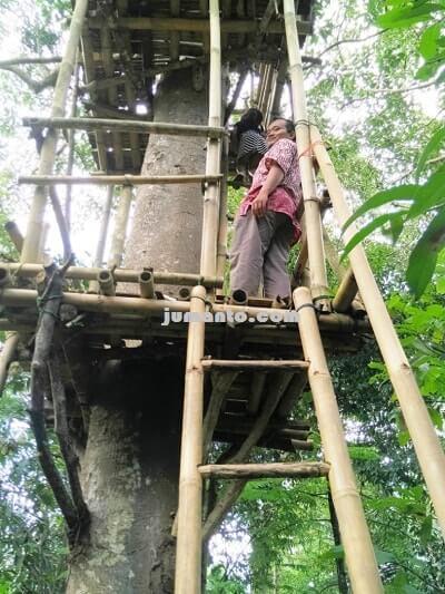 gambar rumah pohon paling tinggi di kemiling lampung