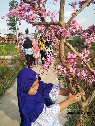 pohon sakura di taman asmara lampung
