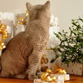 Thoughtful Gifts for Cat Owners