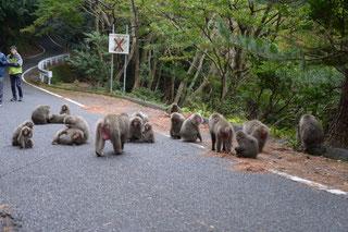 屋久島のサル