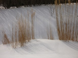 Shadows of grasses on snow