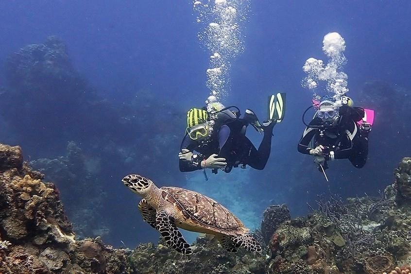 divers turtle cozumel