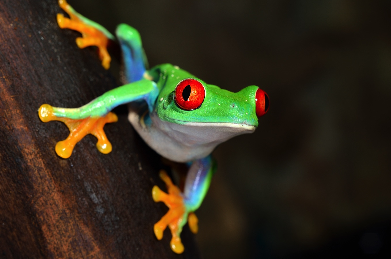 Save the trees and the frogs will also be saved