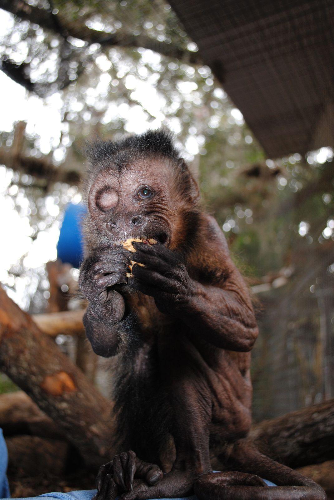 Jungle Friends Primate Sanctuary JN 2012 03 21 Money For