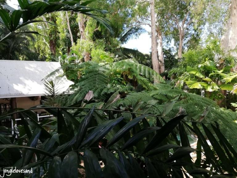 Palm Cove_Tropic Apartments
