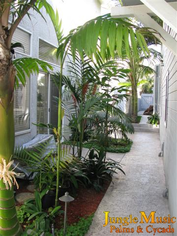 Tropical Landscape Tropical Landscaping With Emphasis On