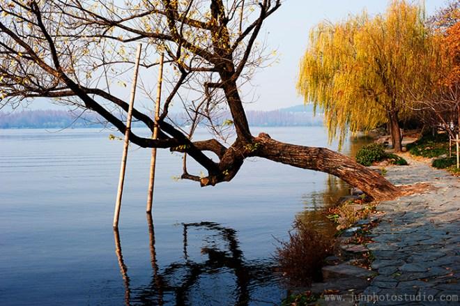 scenery photo tree beside the lake