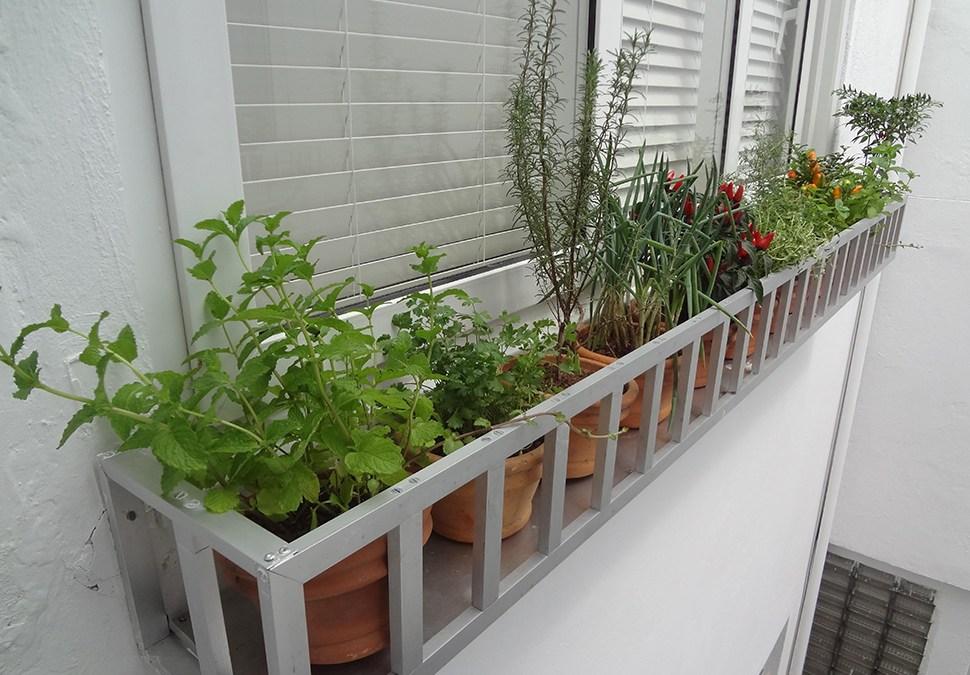 10 plantas ideais para sua horta em casa