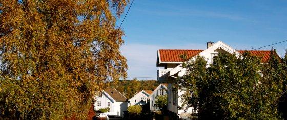 Naboer og trær