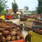 Industri Sawit Tengah Diuji