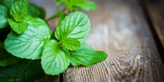 Manfaat dari Daun Mint (Peppermint) dan Cara Pengolahannya