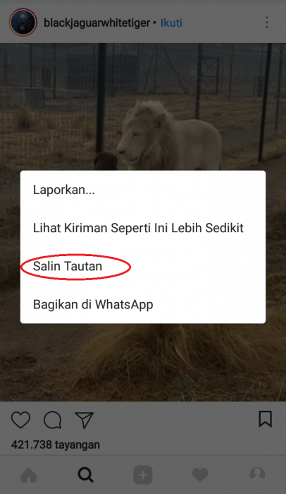 Cara Copy Link URL Instagram (Akun, Foto, Video) di Android (4)