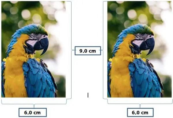 Ukuran Foto 2R dalam Satuan cm