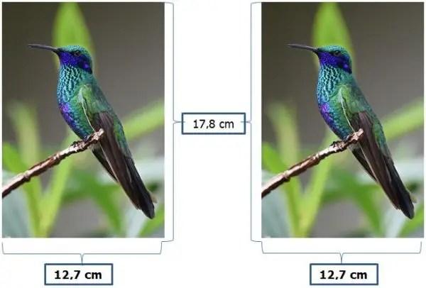 Ukuran Foto 5R dalam Satuan cm