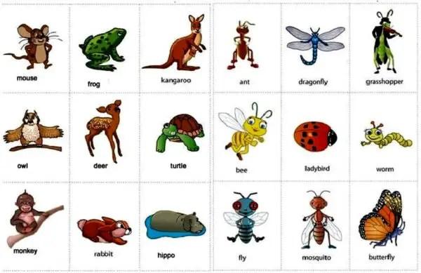 nama nama hewan dalam bahasa inggris dan gambarnya