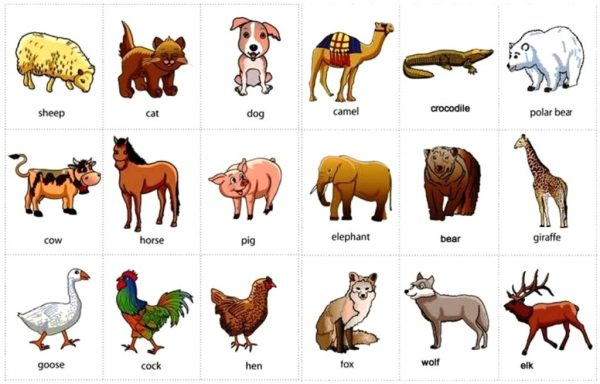 240+ Nama Binatang Dalam Bahasa Inggris dan Cara ...