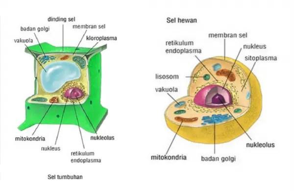 organel Sel hewan dan tumbuhan