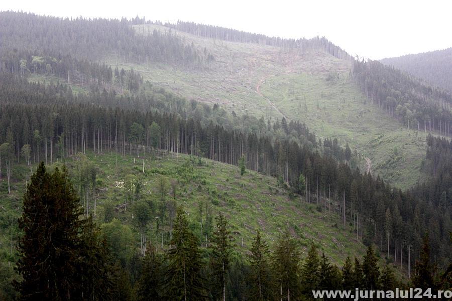 padure defrisata muntii carpati