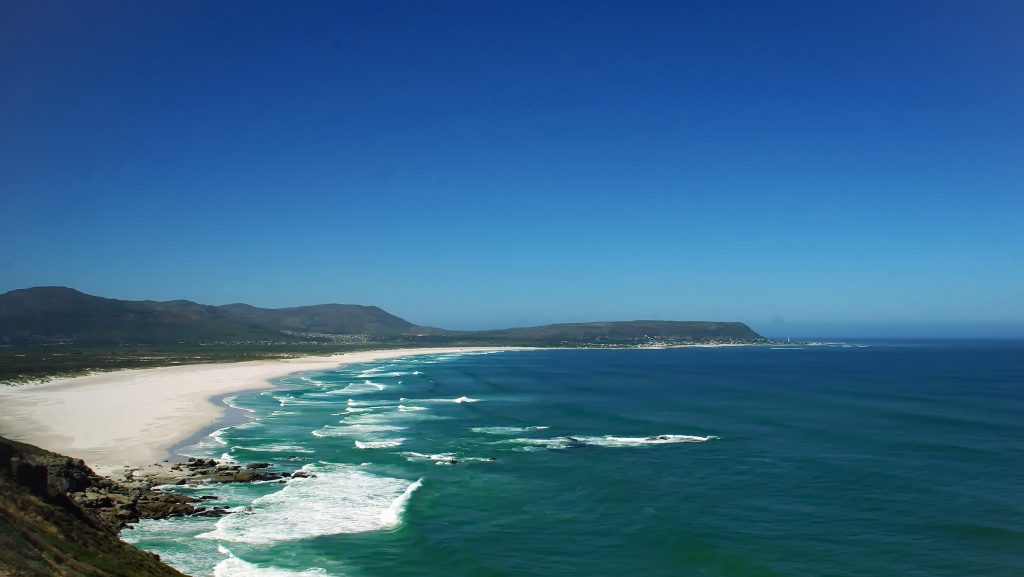 Vor der Küste Südafrikas kommt der Weiße Hai besonders häufig vor: Er findet hier reichlich Nahrung in Form von Seehunden und Seelöwen. Foto: Pixabay