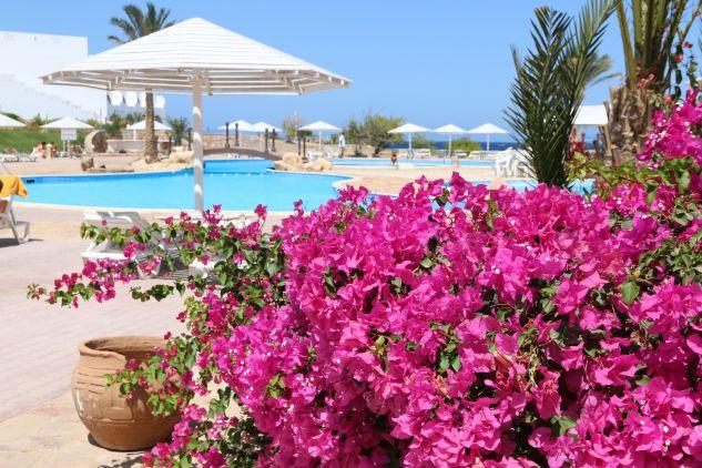 Ägypten ist zurück: Am Roten Meer kann man im Herbst super guten Urlaub machen. Foto: Sascha Tegtmeyer