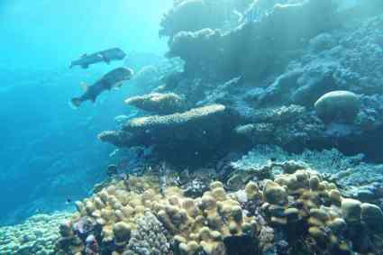 Urlaubstipps Für Makadi Bay Strand Schnorcheln Sonne Tanken