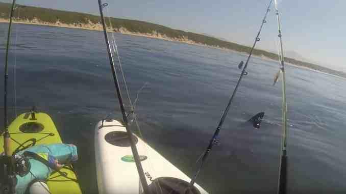Ein Weißer Haie hatte in Australien das Kajak eines 15-jährigen Mädchens zum Kentern gebracht. Foto: youtube.com