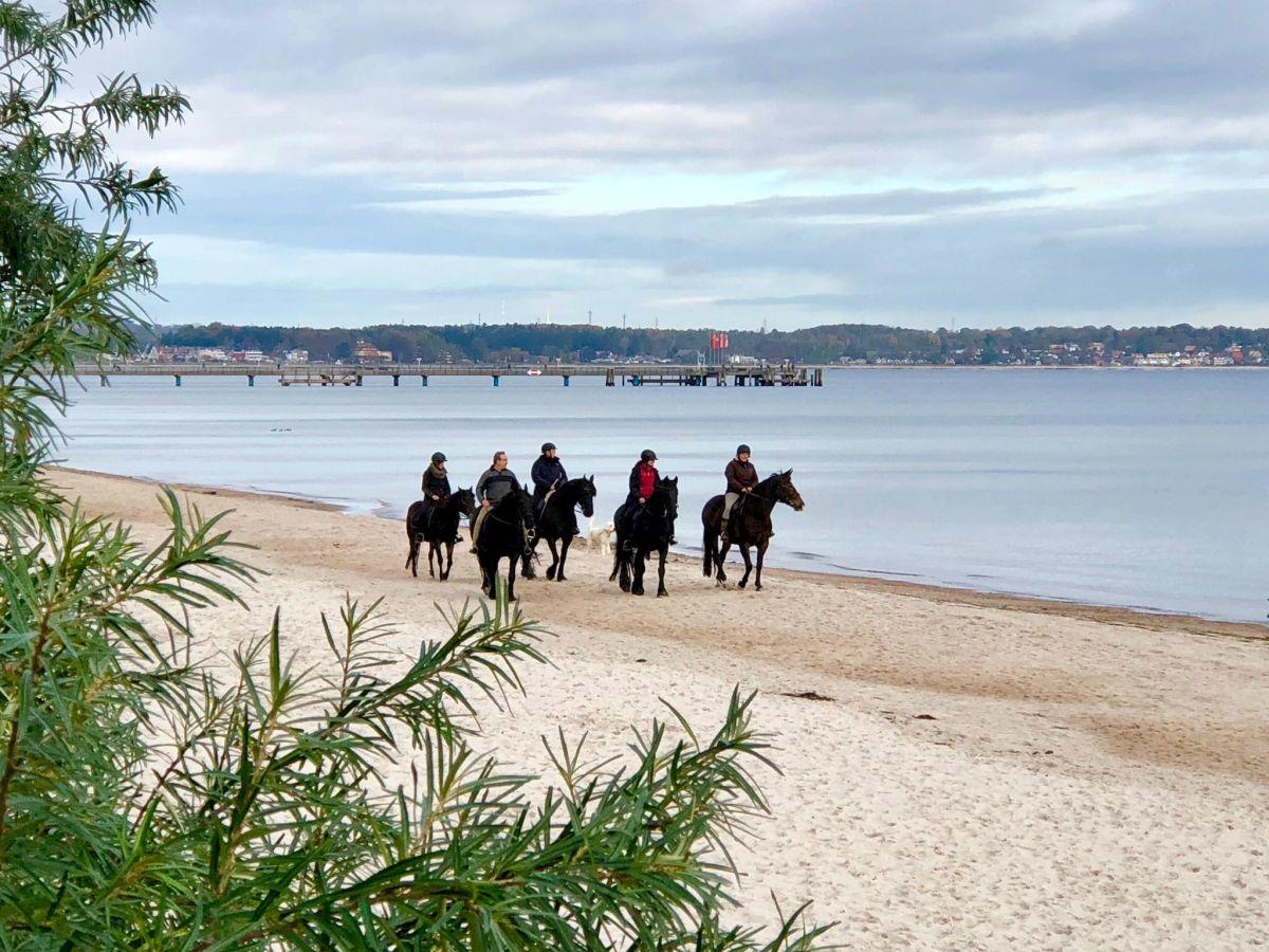Reiten in Timmendorfer Strand: Das sind die besten Reiterhöfe