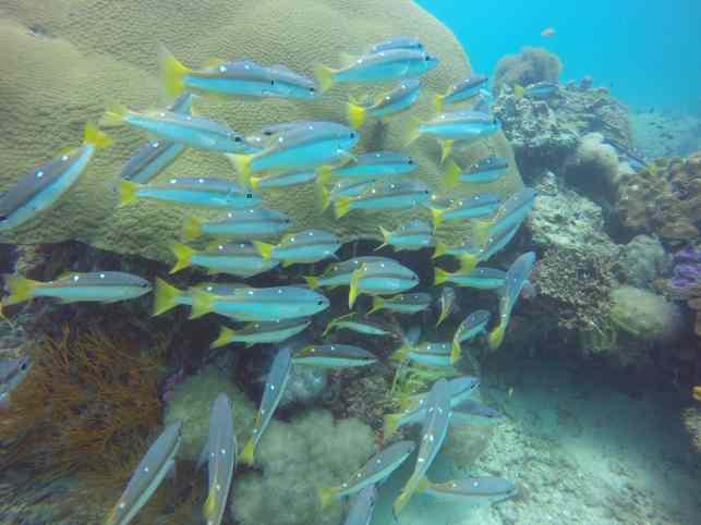 Beim Tauchen auf Koh Lipe können etliche Fischarten und viele bunte Korallen beobachtet werden. Foto: Sascha Tegtmeyer