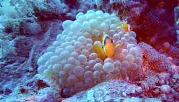 Reisebericht Safaga Tauchurlaub: Eines der größten Abenteuer ist es, die Unterwasserwelt zu erforschen! Foto: Sascha Tegtmeyer