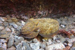 Tauchen auf Madeira: Die herrliche Unterwasserwelt hat es besonders im Garajau-Nationalpark in sich! Foto: Sascha Tegtmeyer