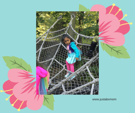bronx zoo spider web