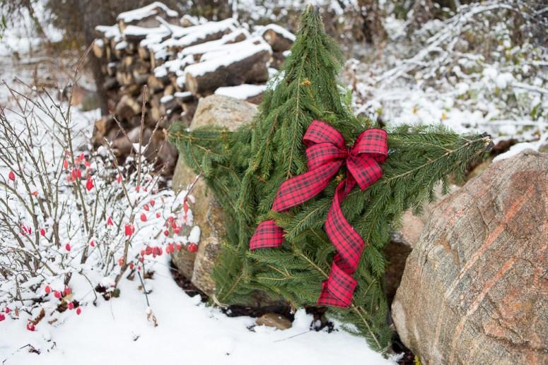 Christmas star greenery