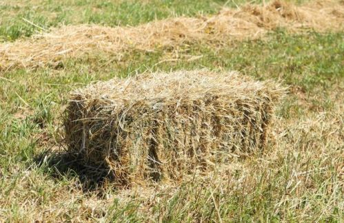 Guide on Choosing Hay for Dairy Cattle