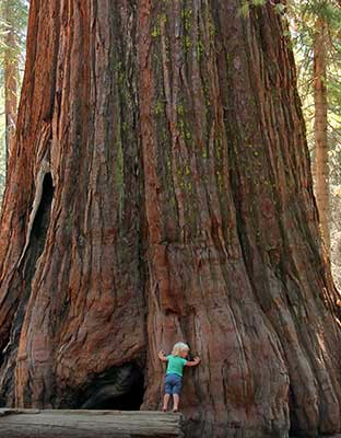 Sequoia National Park and Kings Canyon National Park Audio Tour
