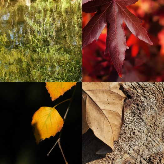 collage d'automne