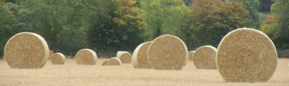 The straw bales made so many different patterns. I liked this one best.