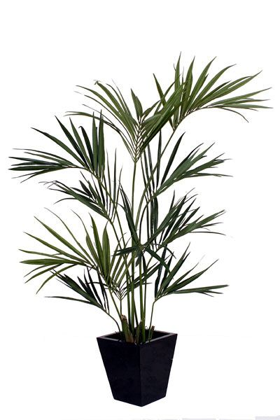 Artificial Silk Kentia Palm Tree Just Artificial