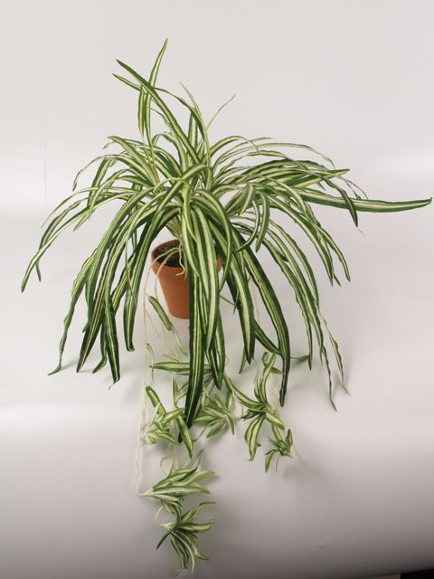 Artificial Silk Spider Plant With Babies Just Artificial