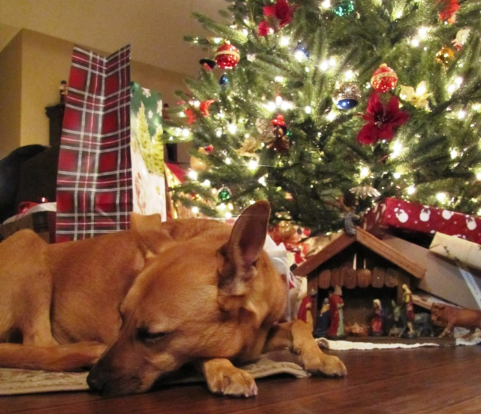 Christmas at Home with Roxie