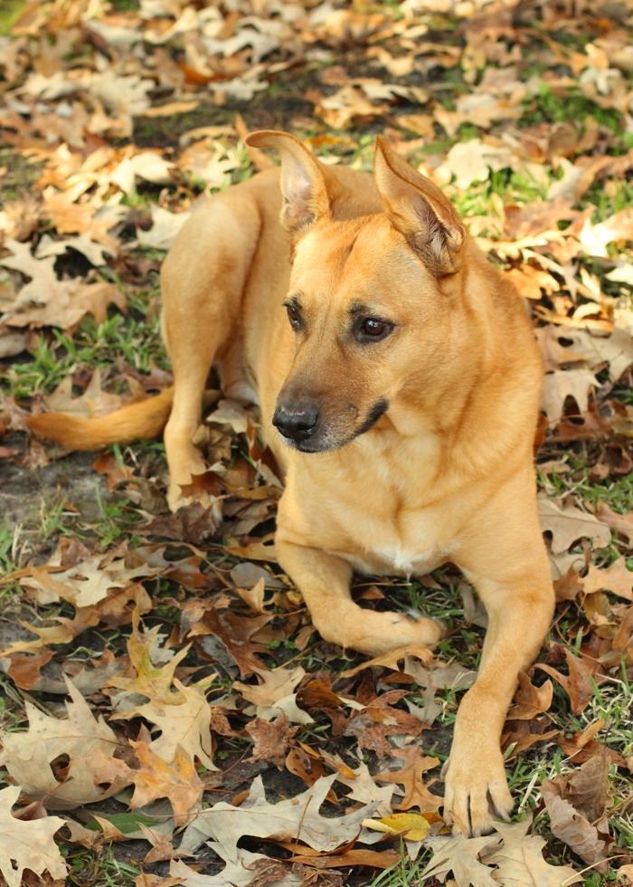 Roxie in Fall