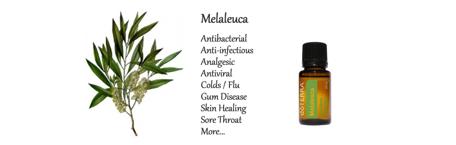 Essential Oil Tip #1 – Melaleuca