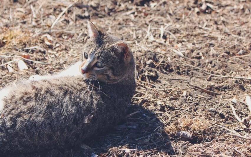 farm_cat