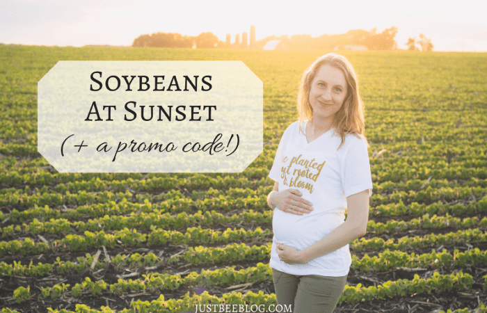 Soybeans at Sunset (+ a promo code!)