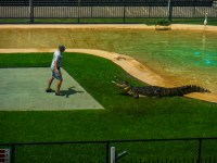 http://www.justbeingbrooklyn.com/crocoseum-flesh/